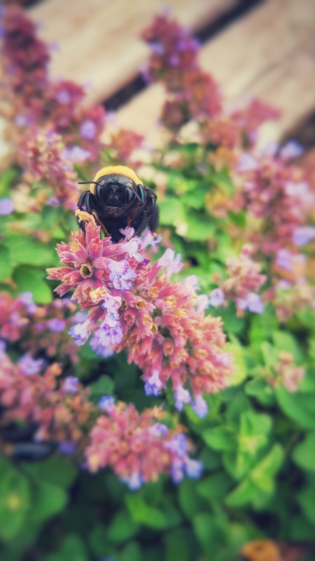 Spring bumble bee
