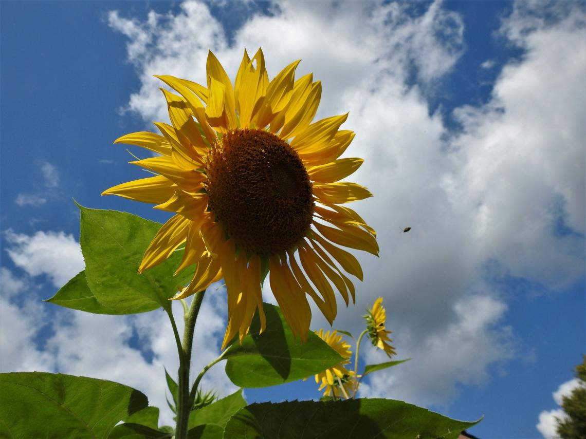 I Got Sunshine on a Cloudy Day