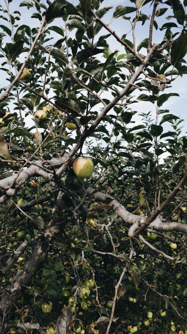 Orchard I