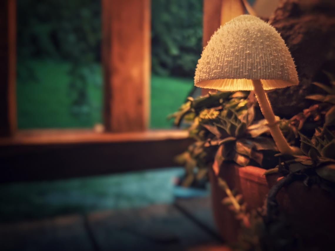 Mushroom Evening