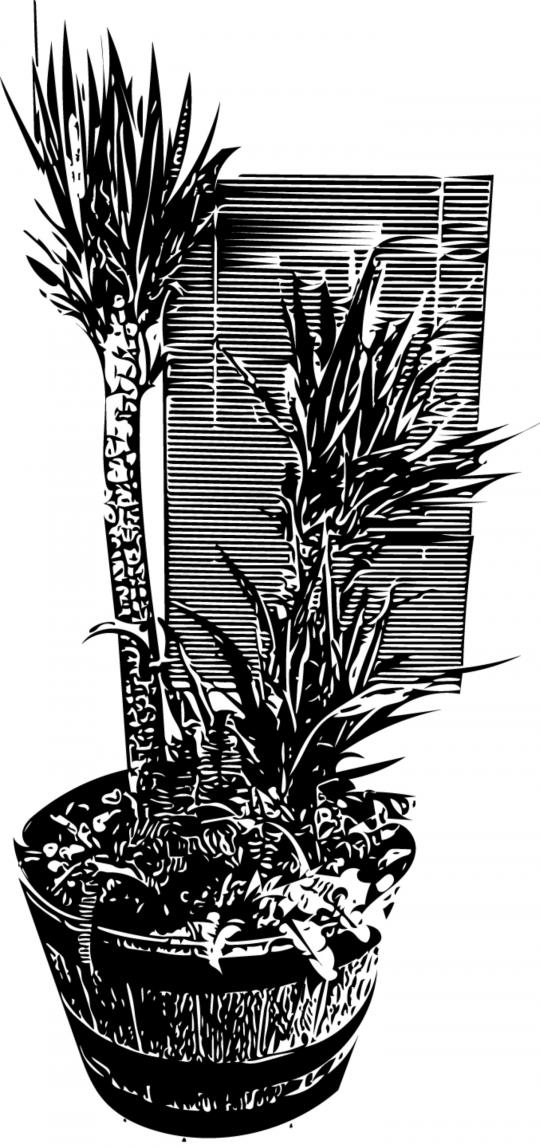 My indoor plants In vector form:)