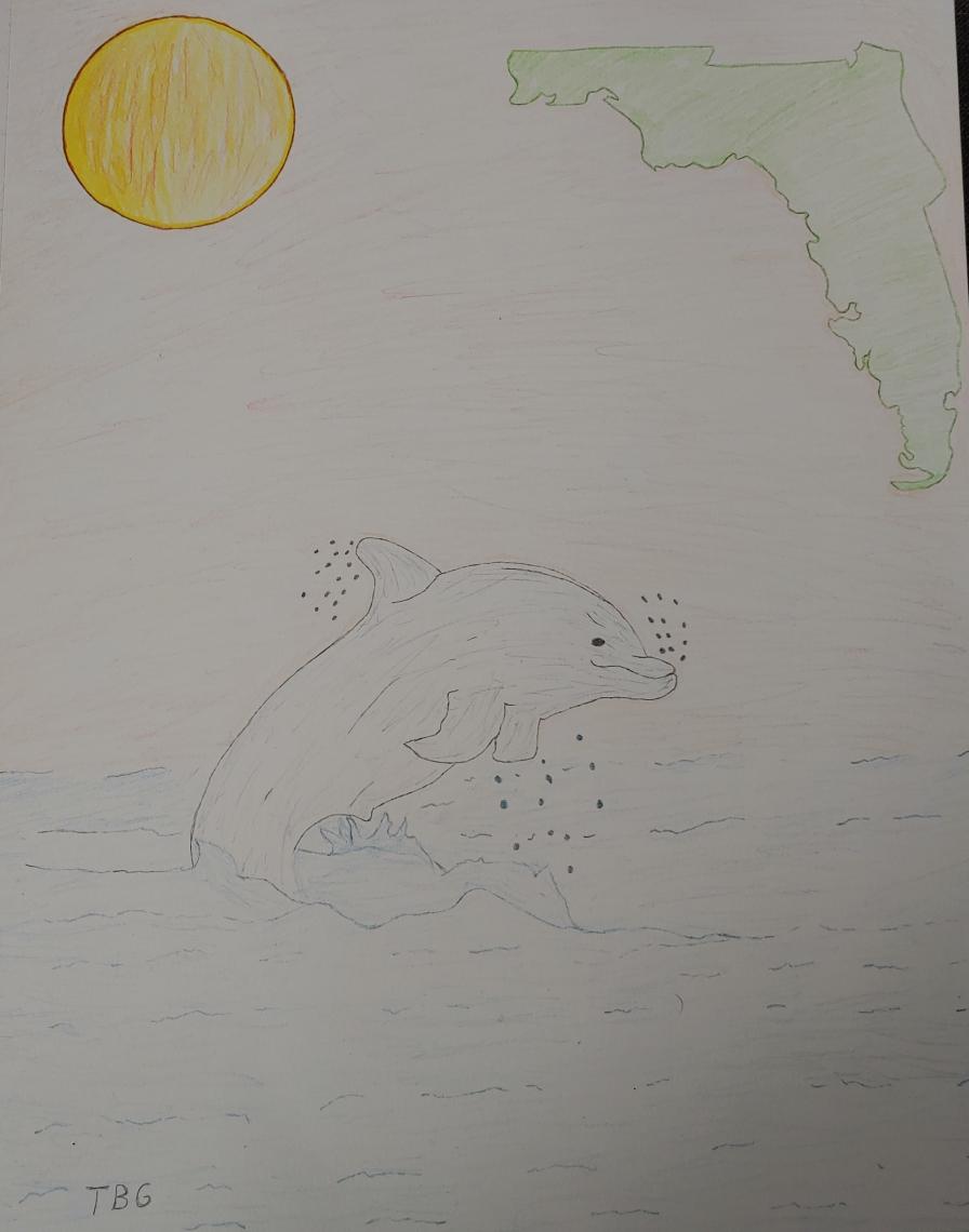 Dolphin under the florida sunset