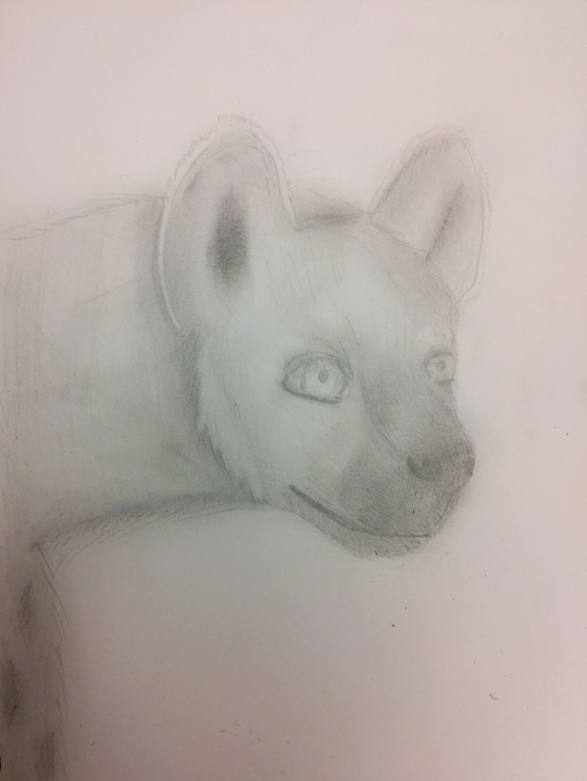 Hyena Art (please read desc.)