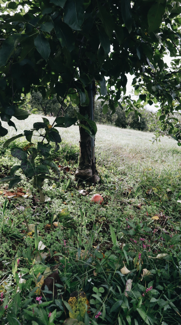 Orchard II